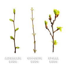 Tree Leaf Identification Chart How To Identify Trees By Leaves Bark Shape More With