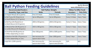 Ball Python Feeding Chart How Much To Feed A Ball Python