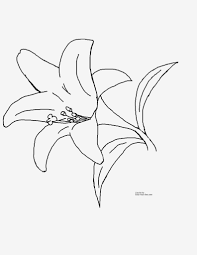 Spring Flowers Coloring Pages 2 Photoage