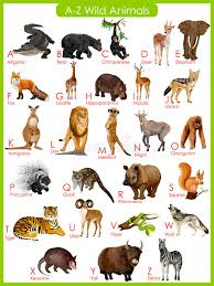 Chart Of A To Z Wild Animals Stock Vector Illustration Of