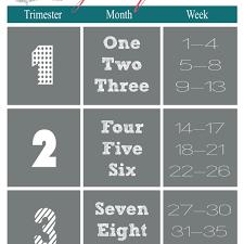 Pregnancy Chart Weeks Months Trimesters Www