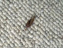 area rugs at ollies. plain area deadbug to area rugs at ollies h