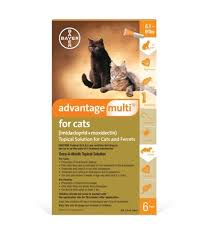 imidacloprid for cats. Contemporary Cats Advantage Multi For Cats 519 Lbs In Imidacloprid For V