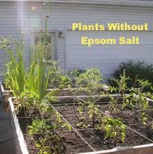 epsom salt for gardening. Handy List Of How Much Epsom Salt To Use: Garden Startup: Sprinkle Approximately One For Gardening