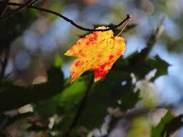 Beautiful Autumn in Mass by Gina Marino | Autumn, Beautiful, Marino
