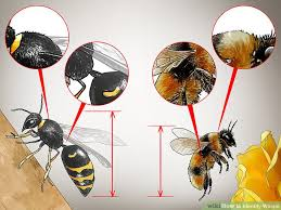 3 Ways To Identify Wasps Wikihow