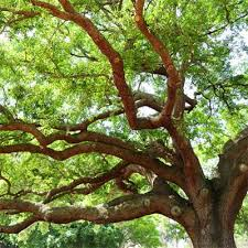 Lovely Good Trees For Backyard Great Pictures  Home DesignGood Trees For Backyard