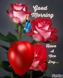 good morning red rose hd wallpaper gif onvacations image josh