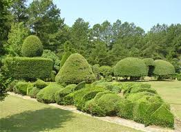 pearl fryar topiary garden overview