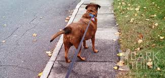 retractable dog leashes are not that bad