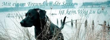 Nice Sprüche Hund Mensch Beziehung Photos Schone Hundespruche Und