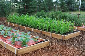 raised bed gardens are easy to care for and produce abundant harvests susan