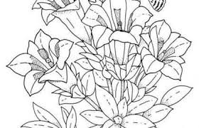 Free Printable Flower Coloring Pages Fresh Coloring Pages For Kids