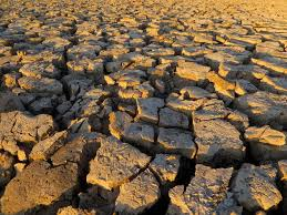 share humanity stand united un against the drought  drought image
