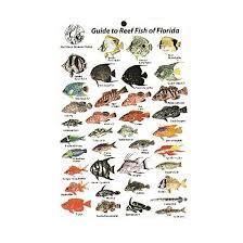 Trident Card Mini Florida 'n Dip Id Dive Fish