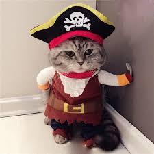 funny cat costumes pirate suit