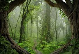 Aofoto 5x3ft Fantastic Forest Backdrop Spring Jungle Hiking Summer Woods Pathway Photography Background Misty Wonderland Trees Plant Suburbs Picnic