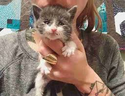woman has the best job ever rescuing the tiniest kittens