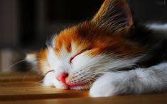 cute cats wallpapers wallpaper cave baby s funny s funny cats cute