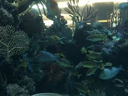 Fish Aquarium At Chart House Picture Of Golden Nugget