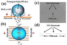 Micromachines Free Full Text Recent Trends On Micro Nanofluidic