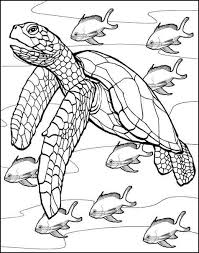 Coloring Pages Turtle Coloring Pages Cute Sea Turtle Coloring
