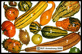 Gourd Identification Chart The World Of Gourds
