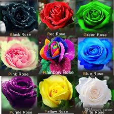 2018 yy farm easy grow flowers rose seed rainbow pink black white red purple green blue rose seeds free ship from caroer 9 86 dhgate