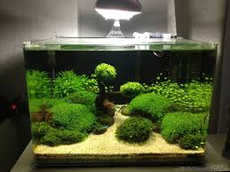 Turtle Tank Decor Java Moss Tree In Fish Tank Awesome Sash Pinterest Trees