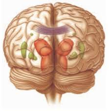 Hasil gambar untuk Meningkatkan Plastisitas Otak