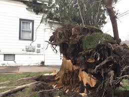 high winds caused power outages and trees to come down across western new york
