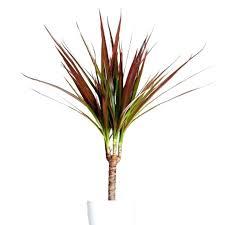 common house plant common household plants the best common house plants ideas on house plant care common house plant
