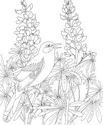 Small Picture Free Printable Coloring Page Texas State Bird Northern