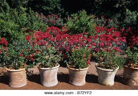 le mas de la brune. Terracotta Pots And Red Roses In The Alchemist\u0027s Garden, Mas De La Brune Hotel, Le I