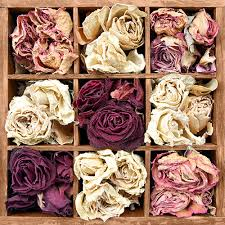 there is an enormous variety of plants and flowers suitable for drying for use in craft and fl hobbies this is a short list of the most mon types