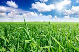 green grass blue sky.  Green For Green Grass Blue Sky