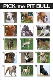 Pitbull Color Chart Complete American Bully Breeding Color Chart Pitbull Breeds