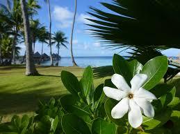 Risultati immagini per foto vaniglia della polinesia