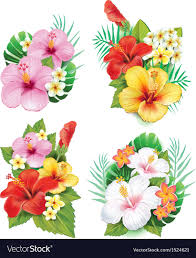 hibiscus flowers arrangement from hibiscus flowers royalty free vector image