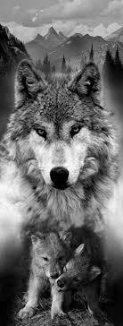 новости Tattoo Tetování Zvířat Tetování Vlka A Tetování