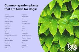 plants and dogs the good the bad