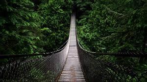 Jungle, Nature, Trees, Forest, Bridge ...