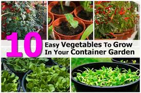 container gardening for beginners. Container Gardening For Beginners
