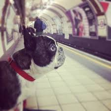 pop up bench dog. animals on the tube pop up bench dog
