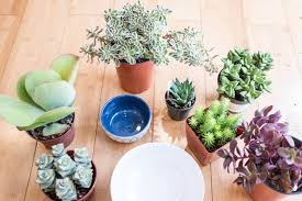 how to plant a succulent garden in a bowl materials