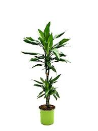 Come per le piante grasse, anche queste sono ideali per. Piante Da Appartamento Le Migliori Piante Da Interno Del 2021