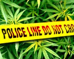 Marijuana arrest and government spending