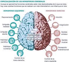 el cerebro un órgano que no descansa
