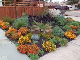 Small Picture Sturdy Farallon Gardens Alameda Drought Tolerant February Blooms