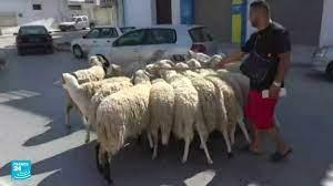 ريبورتاج: أزمة فيروس كورونا تطغى على أجواء عيد الأضحى في تونس